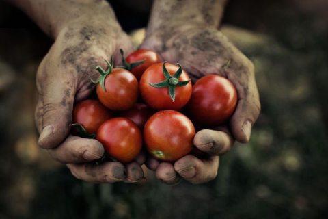 Image urban farmer