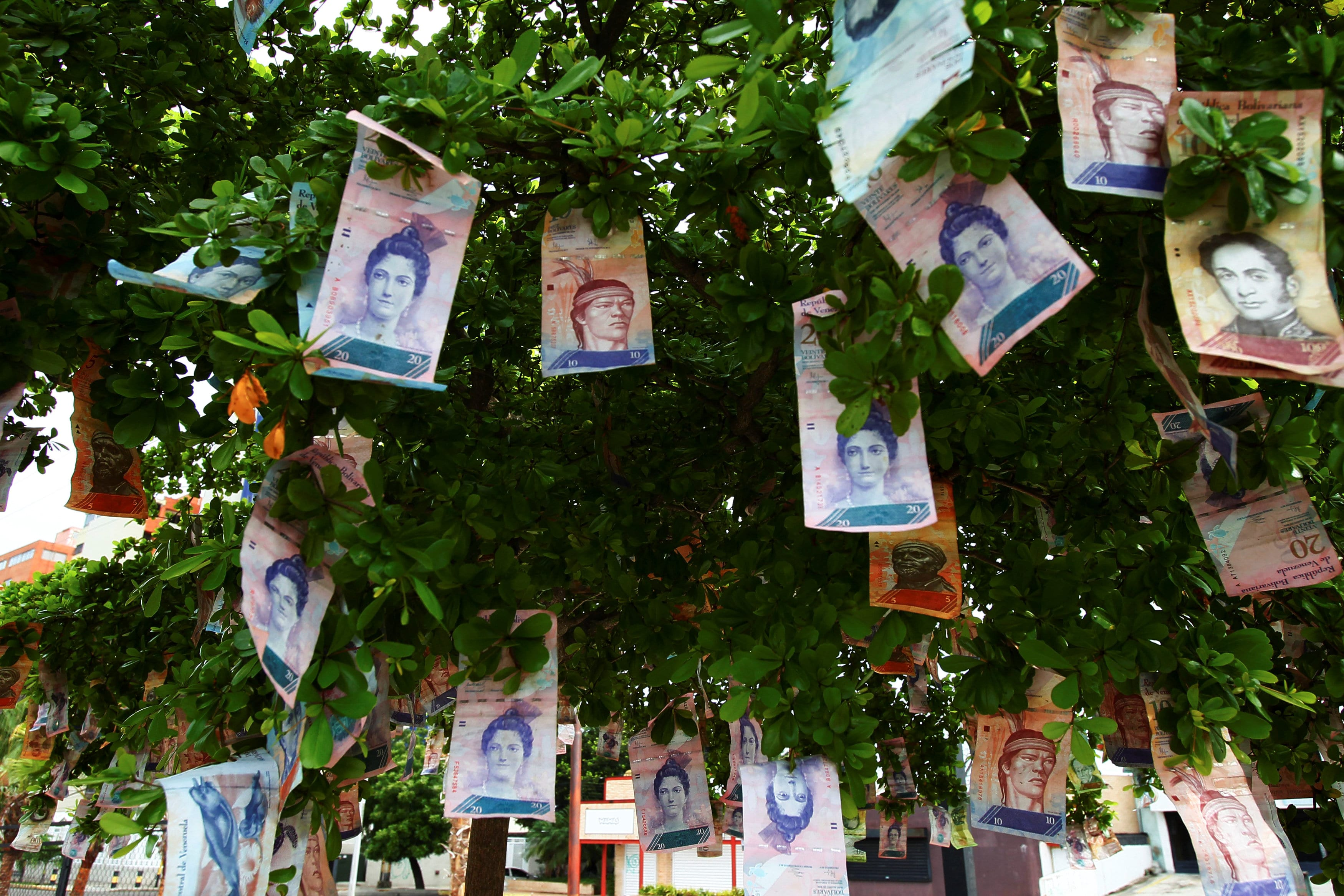 Image Bolivar notes hanging from a tree in Maracaibo, Venezuela November 11, 2017. [REUTERS/Isaac Urrutia]
