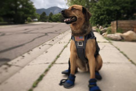 Image Geronimo: A Service Dog's Tale [Lima Charlie News][Image: Don Martinez]