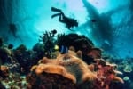 Image Combat Veterans, Scientists, Gamers work to save the world's dying coral reefs [Lima Charlie News]