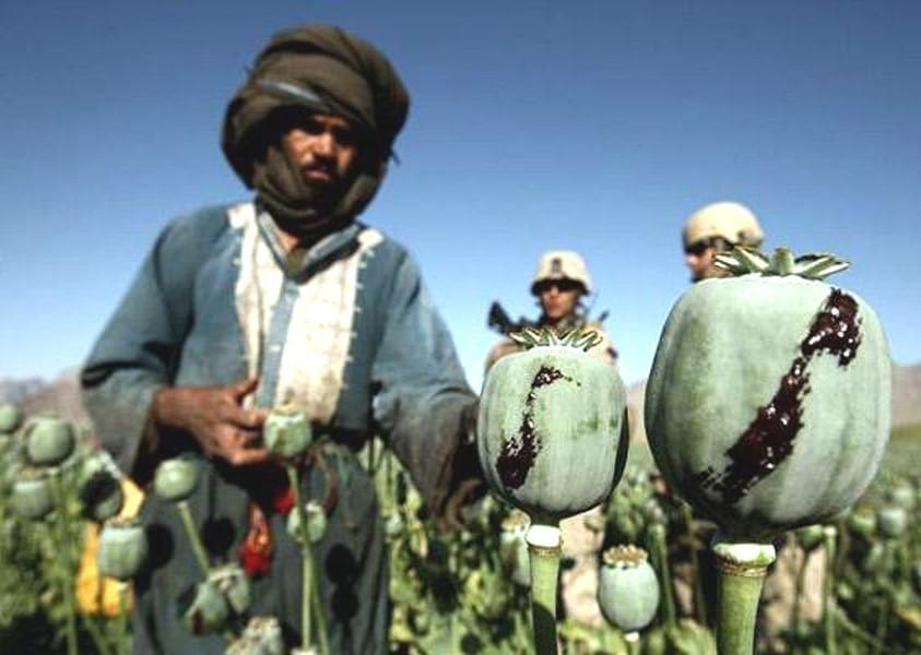image [An Afghan man harvests opium in a poppy field while US soldiers look on in a village in Golestan district, Farah province, Afghanistan (Caption: The Telegraph; Photo: Reuters)]