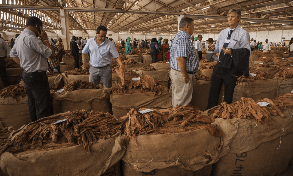 Buyers at a tobacco auction in Lilongwe, Malawi's capital. (Amos Gumulira)